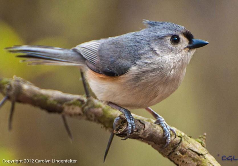 2012_04_birds_161