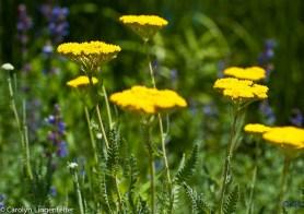 2012_06_arboretum_008