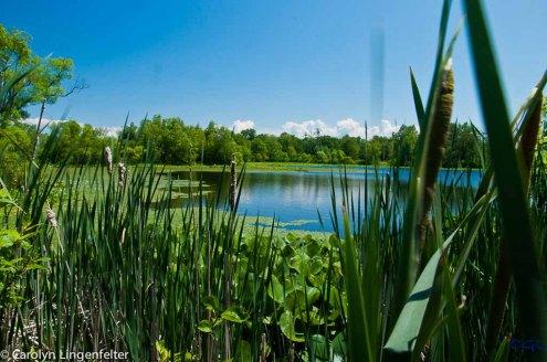 2012_06_arboretum_135