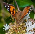 2012_09_arboretum_041