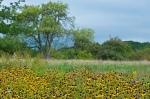 2012_09_arboretum_063