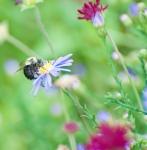 2012_09_arboretum_076