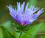 2012_09_arboretum_087