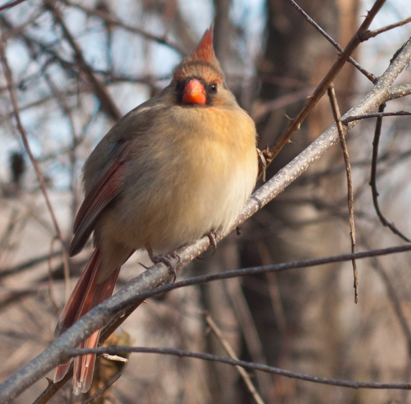 "The National Audubon Society has designated the park an ""Important Birding Area."""