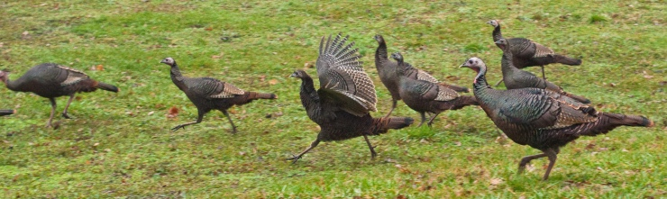 Race you to the bottom of the hill! Last one down is a .....TURKEY!