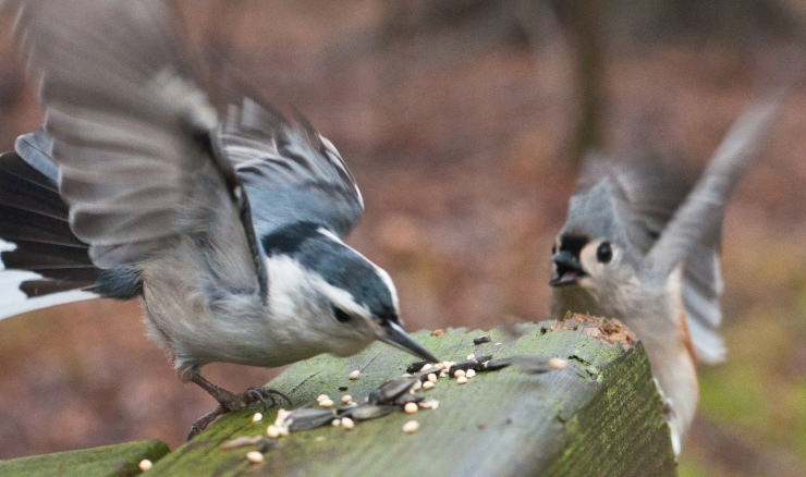 Food fight at the bird buffet