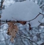 juxtaposition of seasons