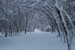 arching trees with snow