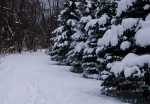 more snow-covered evergreens