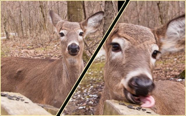 deer_seeds