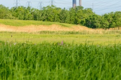 Meadow and distant power plant