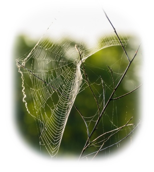 Spider web in morning light
