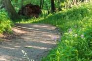 Trail through the bog