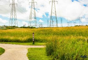 Power towers in the meadow