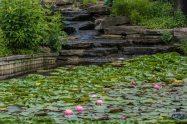 2015_07_02_Holden Arboretum_003