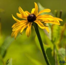 Yellow: my favorite flower