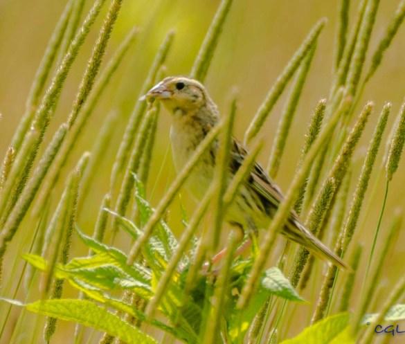 2015_07_03_bird photography_013