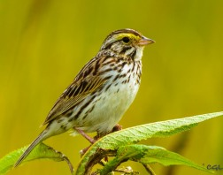 2015_07_03_bird photography_158