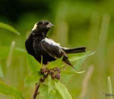 2015_07_03_bird photography_169