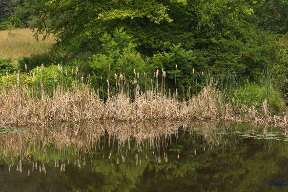 Quiet pond in the Butterfly Garden
