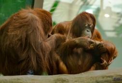 2015_08_10_Cleveland Zoo_098
