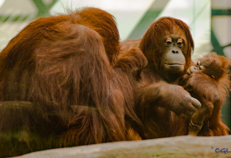 2015_08_10_Cleveland Zoo_102