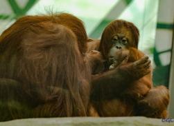 2015_08_10_Cleveland Zoo_105