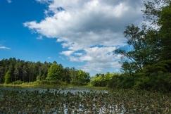 2015_08_24_Holden Arboretum_052