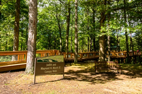 Entrance to the Canopy Walk
