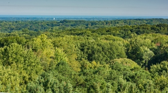 Another view of Lake Erie beyond the trees.