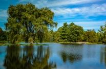 Lotus Pond: one of my favorites