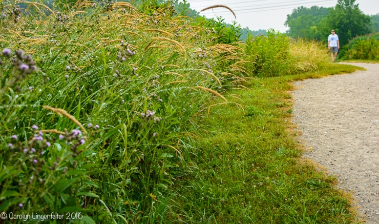 2016_07_05_Trailwalk_Chagrin River Park_0021
