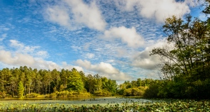 Blue sky over Blueberry Pond