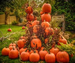 ORANGE is the color of Autumn!