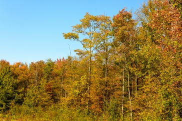 2015_10_08_North Chagrin Reservation_001