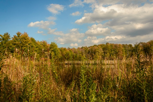 2015_10_08_North Chagrin Reservation_014