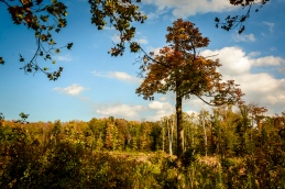 2015_10_08_North Chagrin Reservation_015