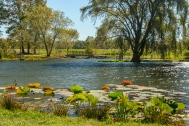 2015_10_12_Holden Arboretum_013