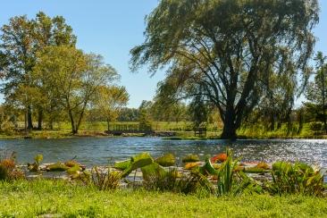 2015_10_12_Holden Arboretum_015