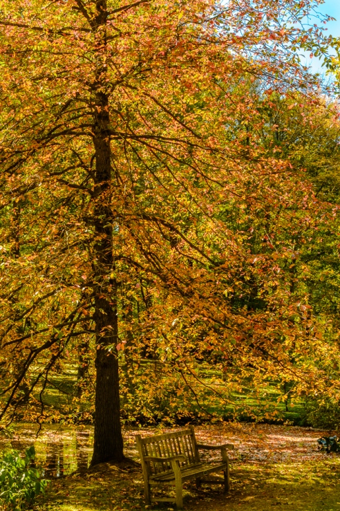 Fall color at Holden Arboretum