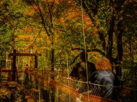 2015_10_12_Holden Arboretum_207