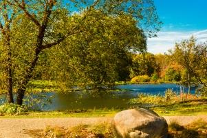 Holden Arboretum Lotus Pond