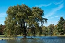 2015_10_12_Holden Arboretum_243
