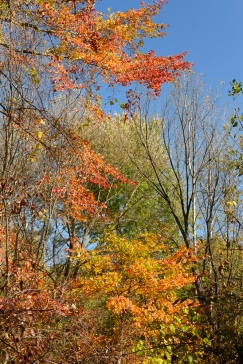 Color in the tree tops.
