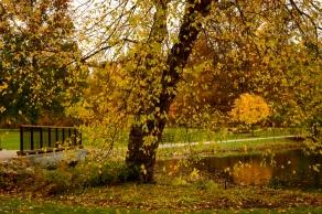 Edge of Lotus Pond