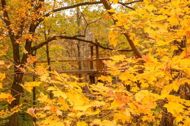 2015_10_22_Holden Arboretum_119