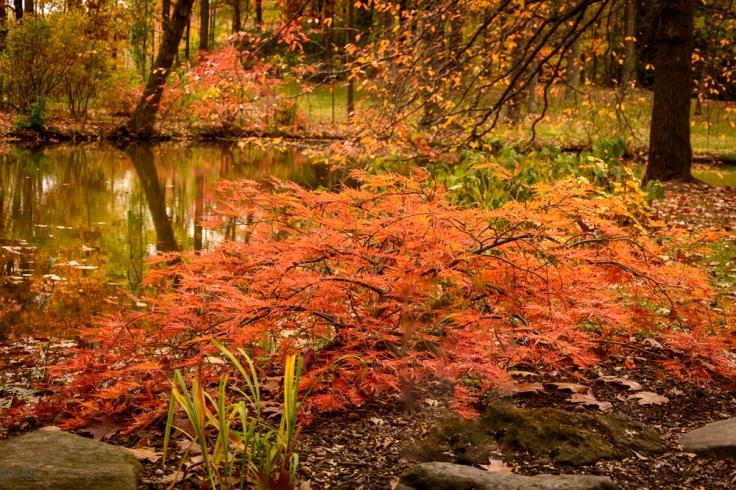 2015_10_22_Holden Arboretum_136-Edit