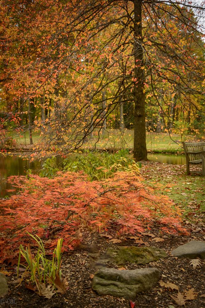 2015_10_22_Holden Arboretum_138-Edit