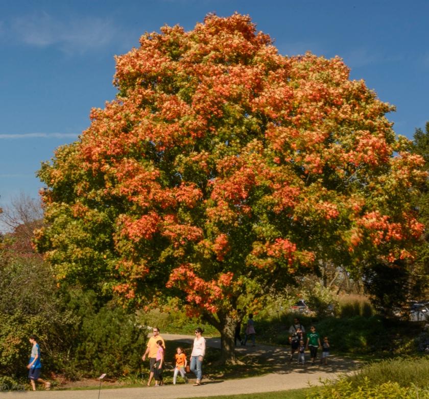 2015_10_12_Holden Arboretum_253