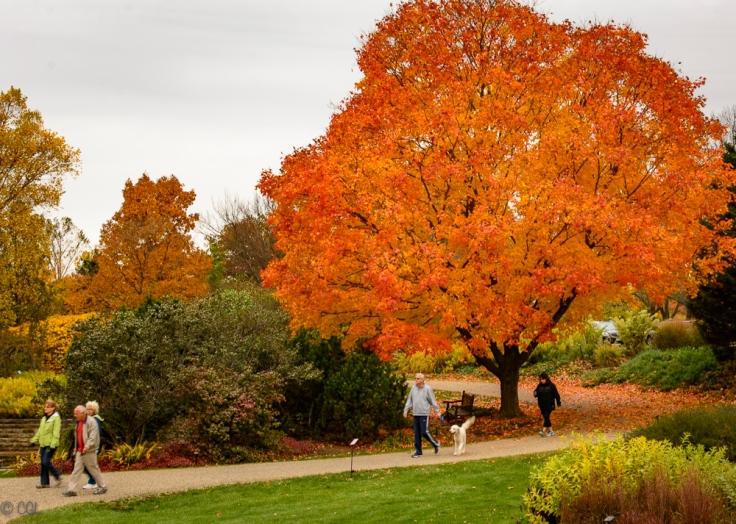 2015_10_22_Holden Arboretum_007